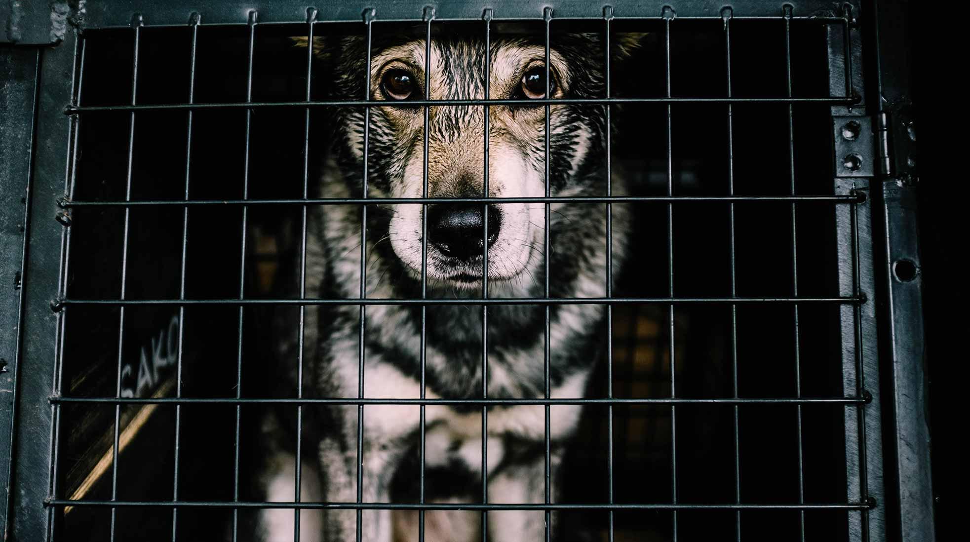 Du kan behöva sätta din hund i en bur när du tar med dem på flyget. Foto: Fredrik Öhlander / Unsplash