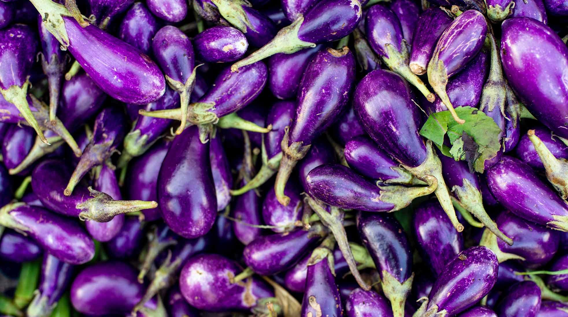 En stor hög med auberginer